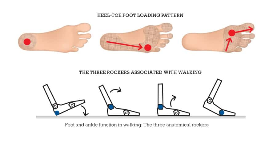 Three rockers of foot and ankle function